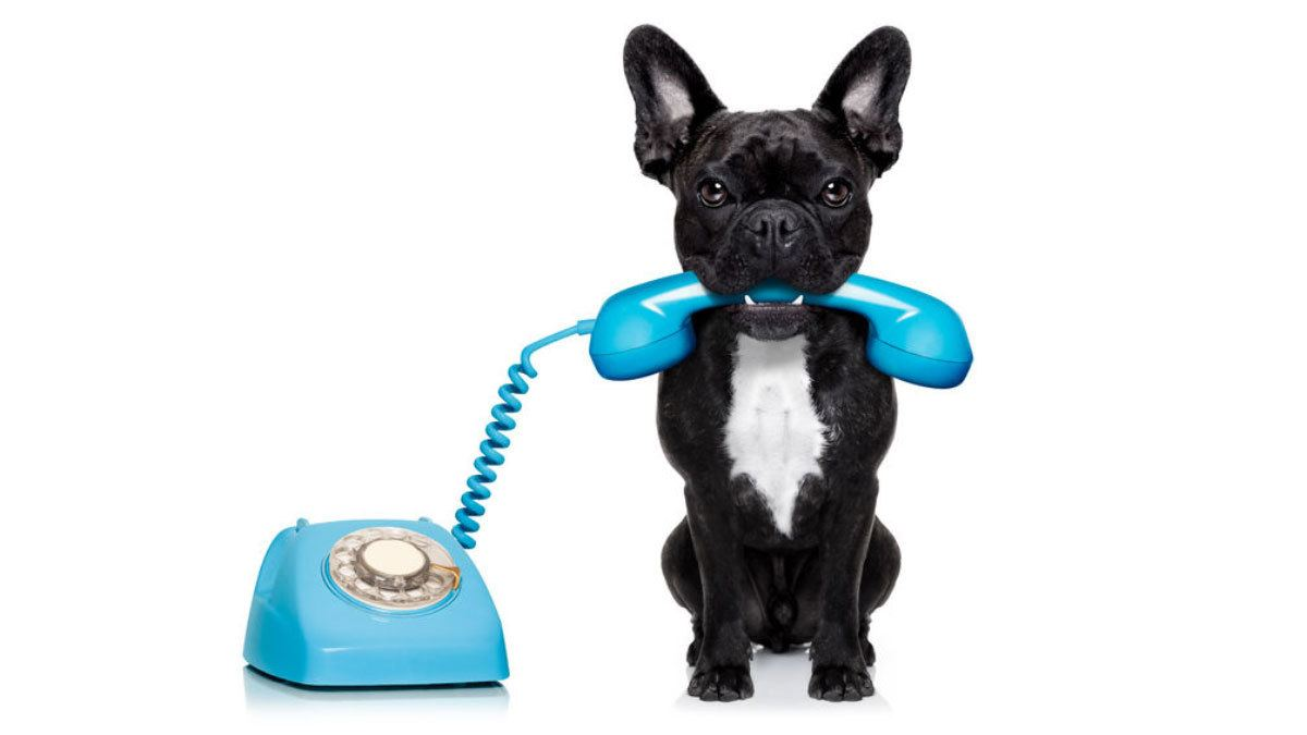 Cute dog holding a phone. Keeping communication open, a secret to social media marketing that the Dental Industry misses.